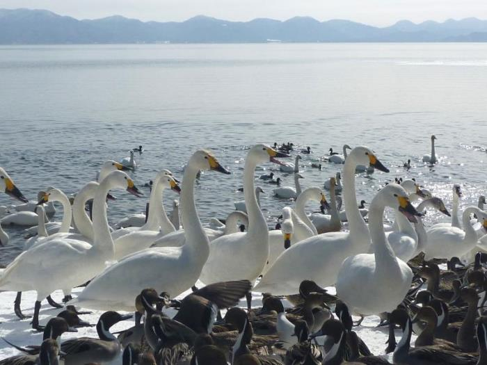 裏磐梯湖畔度假村的圖片4