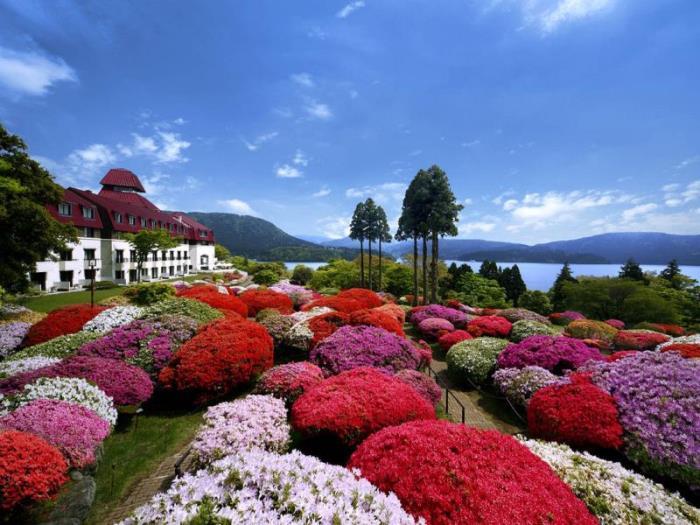 小田急山之酒店的圖片1