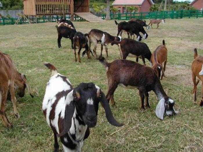 石牛溪農場的圖片5
