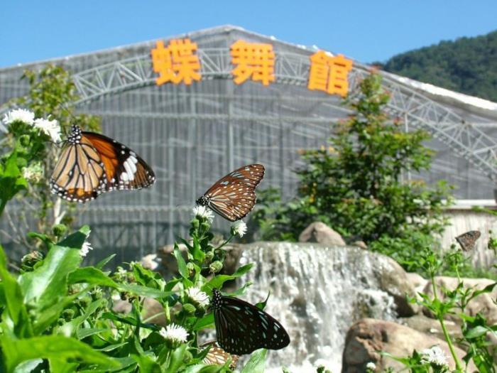 楓樺台一渡假村的圖片5