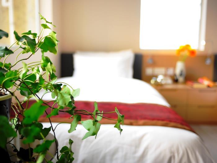 木棉花酒店的圖片5