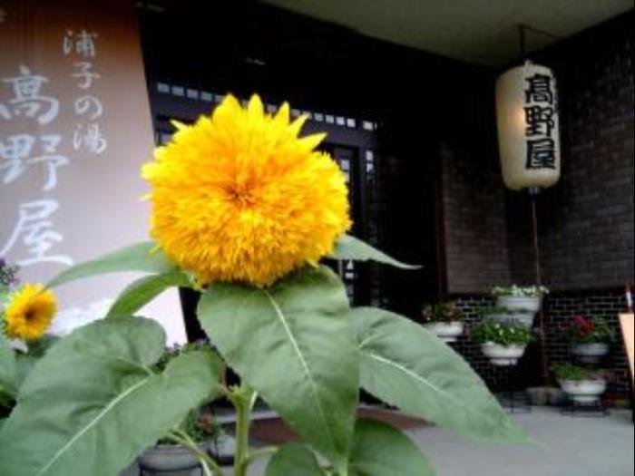 Takanoya酒店的圖片3