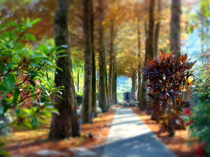 檜木屋渡假民宿的圖片4