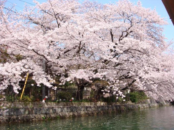 the b京都三條酒店的圖片4